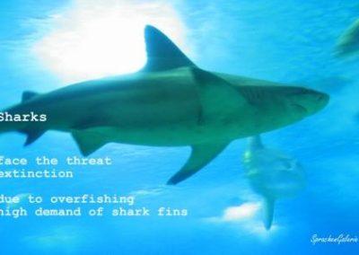 LearnPic voc shark threat TT small
