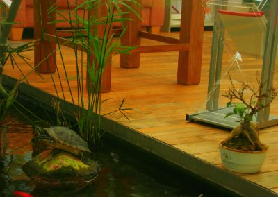 office BS - turtle next to island video