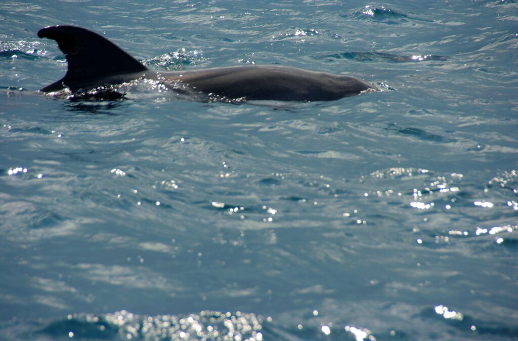 Andalusien-Whale-Watching-SprachenGalerie-1024×682