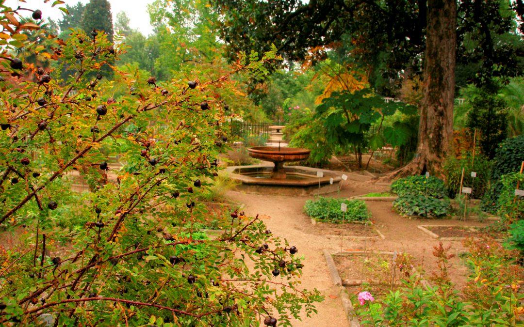 Älteste Botanische Garten der Welt + Englisch für Pharmazie