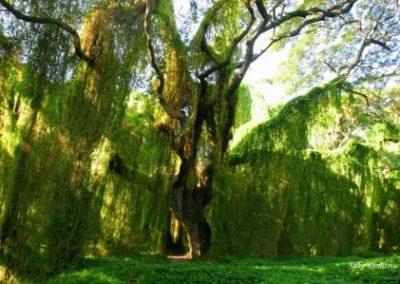 Cuba Havana Voodoo Forest 2 Silke Dimitriw