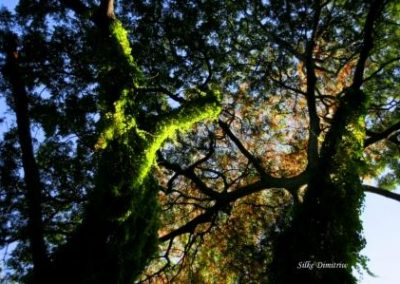 Cuba Havana Voodoo Forest 3 Silke Dimitriw