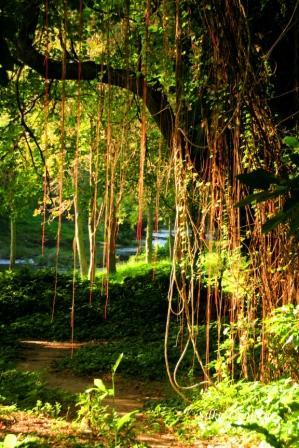Cuba Havana Voodoo Forest 4 Silke Dimitriw