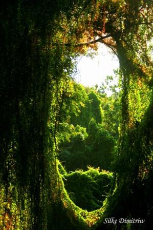 Cuba Havana Voodoo Forest 5 Silke Dimitriw
