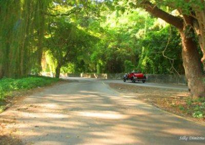 Kuba Havanna Voodoo Forest 1 Silke Dimitriw SprachenGalerie